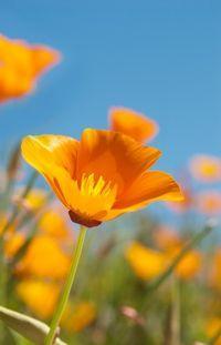 4 Reasons to Love Native Plants [photo by iStockphoto/rubiophoto]