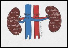 Cálculos renais