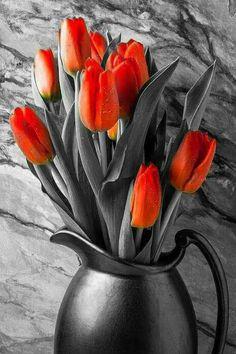 Orange Tulips In Copper Pitcher Art Print by Garry Gay - Tulpen Tulips In Vase, Purple Tulips, Tulips Flowers, Exotic Flowers, Amazing Flowers, Beautiful Roses, Spring Flowers, Beautiful Flowers, Tulips Garden