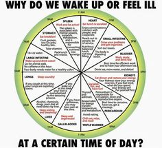 """Acupuncture When will we understand how ahead of us our ancient ancestors were? Long ago, Traditional Chinese Medicine (TCM) discovered that there is a """"body clock"""" that is ref. Ayurveda, Health And Nutrition, Health And Wellness, Health Tips, Health Benefits, Holistic Healing, Natural Healing, Qi Gong, Traditional Chinese Medicine"""