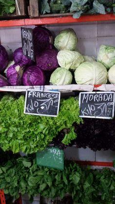 lechuga francesa / lechuga morada (esp) X alface mimosa  / alface roxa (port)