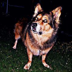 Hunde Foto: Micha und Mogli - Wo fliegt gleich der Ball Hier Dein Bild hochladen: http://ichliebehunde.com/hund-des-tages  #hund #hunde #hundebild #hundebilder #dog #dogs #dogfun  #dogpic #dogpictures