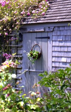a little gray shed in a garden full of perennials