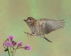 Checking Out the Thistle by Gerry Sibell on 500px
