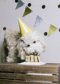 Dog Birthday Party f