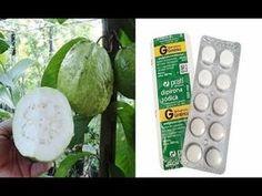 INCRÍVEL esse comprimido faz sua frutifera florir e frutificar em 1 mes e meio confiram. - YouTube