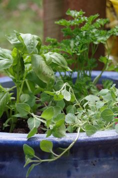Backyard herb gardens are a great way to not only save money (that would normally be spent at the store), but also add a great boost of flavor to all of our favorite meals. Try these tips from @DianeHoffmaster for your backyard garden!