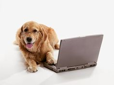 45 Best PawLoyalty Blog Articles images in 2015 | Pet