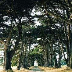 Photo by @jessicasamplegram // At the end of this cypress tree tunnel in Point Reyes, you'll find the historic RCA/Marconi Radio Station which was used in the 1900s to tap Morse code messages from the ships to shore. #pointreyes