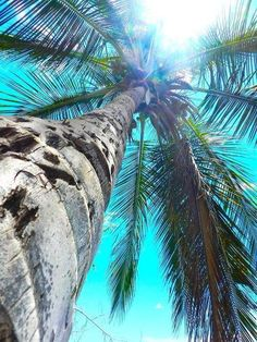 Palms of paradise::Tropical Island :: Travel + Explore + Discover:: Beautiful… Summer Of Love, Summer Beach, Summer Vibes, Photography Beach, Fort Myers Beach, Tropical Paradise, Summer Paradise, Island Life, Belle Photo