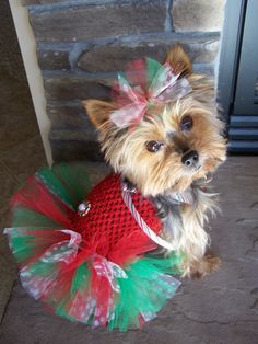 Dog TuTu Dress for toy breeds in Green and Red with by Frillypaws
