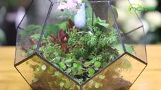 geometric  terrariums Terrarium Containers, Glass Terrarium, Terrariums, Small Potted Plants, Air Plants, Ceramic Planters, Floating Frame, Classic Elegance, Plant Holders