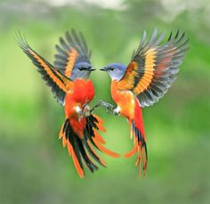 BEAUTY OF WILDLIFE: Awesome Collection Of World Best Cage Birds and Wild Birds Of The Day (Part I)