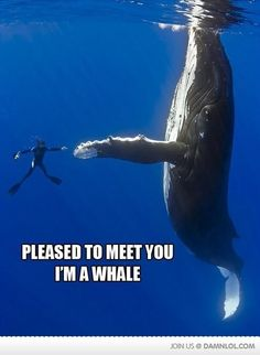 Ohhh the things I would do to meet a whale personally....
