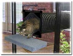 SunCATcher Enclosure tunnel leads directly from window into catio.: ©SunCATcher Enclosures