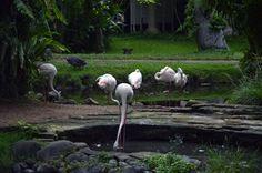 Bali Bird Park - Birds
