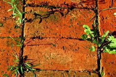 Seeds will land and germinate in your brick driveway, walkway or patio. This guide is about preventing and killing weeds between bricks.