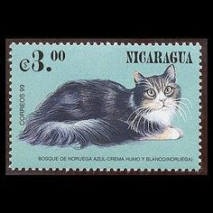 cat on Nicaragua postage stamp