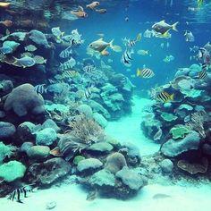 La plongée à Mayotte, c'est un formidable foisonnement de coraux de toutes formes et une grande variété de poisson pic.twitter.com/wYhCHl49e7 via @Ile_de_Mayotte