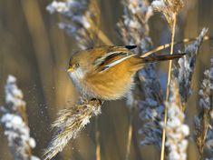 Bird Houses, Finland, Natural Beauty, Birds, Nature, Animals, Beautiful, Bird, Animales