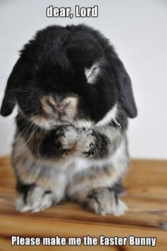 yes, please Lord, make him the easter bunny ! zazazik