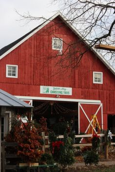 The Christmas tree farm in the story boasts a red barn.