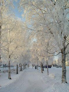 Frosty avenue, Östersund, Sweden by P-too, via Flickr