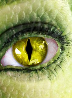 Image detail for -See Snake Eyes by ~Klaymortia on deviantART Eye Pictures, Cool Pictures, Story Inspiration, Character Inspiration, Lizard Eye, Dragons, Creepy Eyes, Dragon Eye, Dragon Makeup