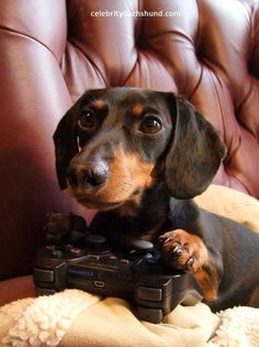 Just let me play a few more minutes....I've almost got this level licked