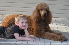 Caleb & Max at Raspberry Woods Poodles