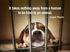 It takes nothing away from a human to be kind to an animal. --Joaquin Phoenix
