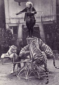 Margarita Nazarova, Russian animal trainer- tame those cats! Circus Pictures, Old Pictures, Old Photos, Old Circus, Night Circus, Vintage Circus Photos, Vintage Circus Performers, Maurice Careme, Lion Tamer