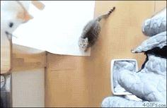 Increíble salto... :O