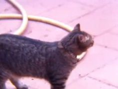 Cats LOVE Looplr! Marbella, Spain by dcee