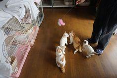 里親さんブログSTOP多頭崩壊! - http://iyaiya.jp/cat/archives/72589