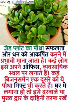 House Plants Decor, Plant Decor, Tips For Happy Life, Lucky Plant, Indoor Water Garden, Home Health Remedies, Diy Hanging Shelves, Vastu Shastra, General Knowledge Facts
