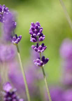 Purple Day: A Global Day for Epilepsy Awareness! Flower Images Free, Flower Pictures, Flower White Background, Free Stock Photos, Free Photos, Flower Bokeh, Pot Image, Customer Service Jobs, Work For Hire