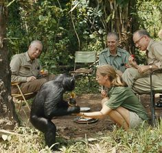 Jane Goodall introduces NG staff to one of her chimpanzee companions at her camp in Africa. #WomensHistoryMonth #tbt