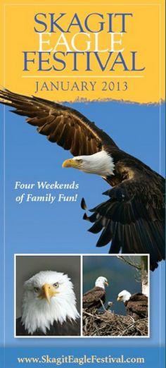 Skagit River Bald Eagle Festival