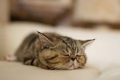 dududu.. sleepy