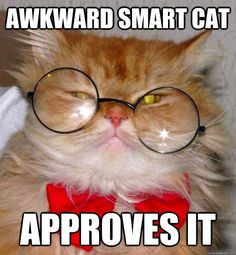 Smartest Cat Breed