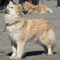 kiara_2 Doggies, Corgi, Cute, Animals, Animales, Animaux, Pet Dogs, Kawaii, Corgis