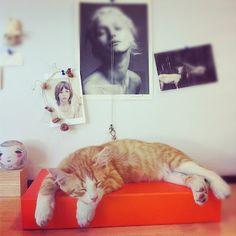 malotti Mood Boards, Cats, Animals, Gatos, Animales, Animaux, Animal, Cat, Animais