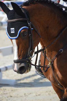 A(z) 10 legjobb kép a(z) Equestrian tools táblán  014d8fd5261fd