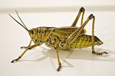 Top 5 Reasons the World Should Be Eating Insects