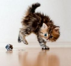 50 Best Cute Kitten Pictures 2 - Cutest Kitten Pics