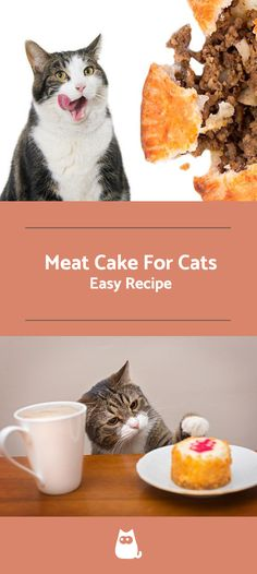 Feeding your cat a proper diet is incredibly important in ensuring that it is healthy and happy. Cats require specific amounts of nutrients and vitamins in their food. Meat cakes for example are a. Take a look at this easy recipe here at AnimalWised! Cake Recipe For Cats, Birthday Cake For Cat, Birthday Ideas, Flea Shampoo For Cats, Meat Cake, Cat Diet, Cake Decorating Piping, Healthy Cake, Edible Cake