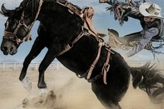 Ride 'em Cowboy! Yee-Haw Photo by Holger Eckstein