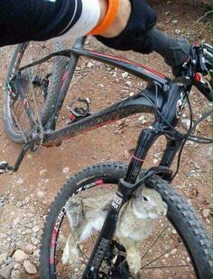 Learning to ride a bike is no big deal. Learning the best ways to keep your bike from breaking down can be just as simple. Mountain Bike Helmets, Mountain Bike Shoes, Mountain Biking, Mt Bike, Road Bike, Dh Velo, Photo Velo, Bike Humor, Montain Bike