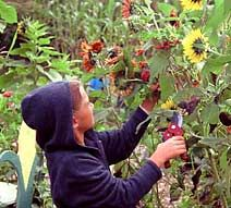Unique ways to incorporate a garden into your curriculum - includes detailed instructions for engaging garden-related activities with hands-on lessons. From kidsgardening.org